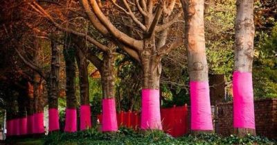 Pink Trees for Pauline post