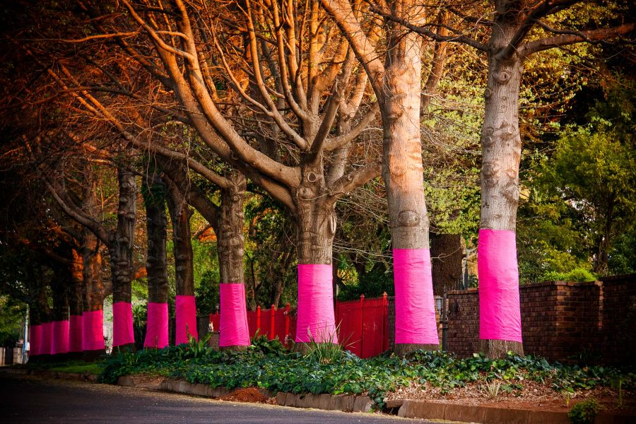 Pink Trees 21 Sep 2014_M du Buson