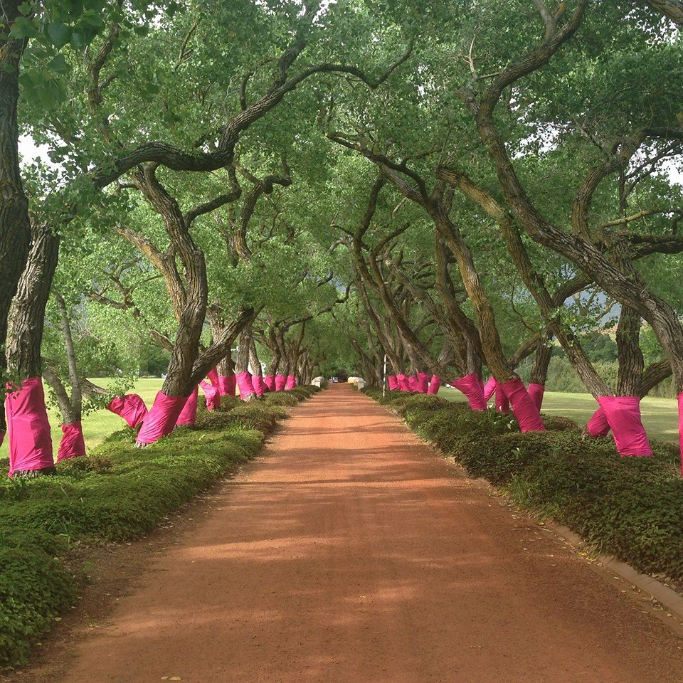 Pink Trees for Pauline 2016