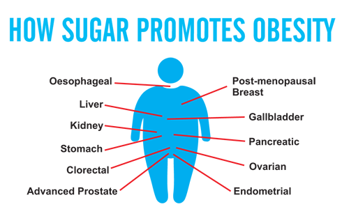 How Sugar Promotes Obesity